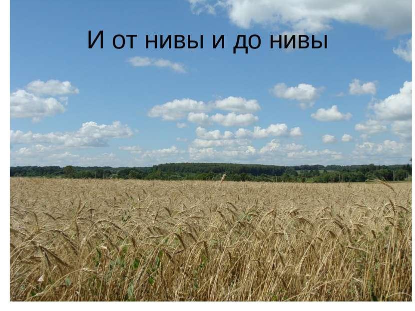 И от нивы и до нивы