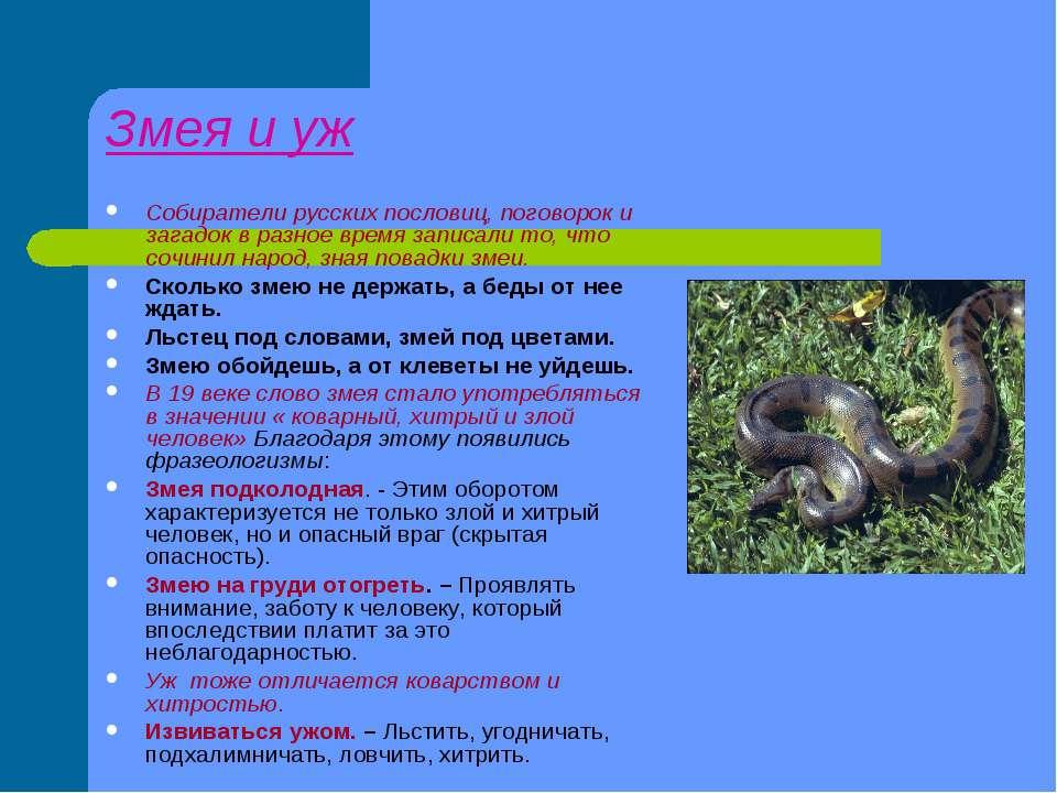 Змея и уж Собиратели русских пословиц, поговорок и загадок в разное время зап...