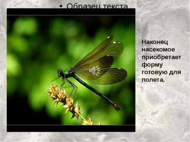 Наконец насекомое приобретает форму готовую для полета.