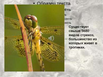 Существует свыше 5680 видов стрекоз, большинство из которых живет в тропиках.