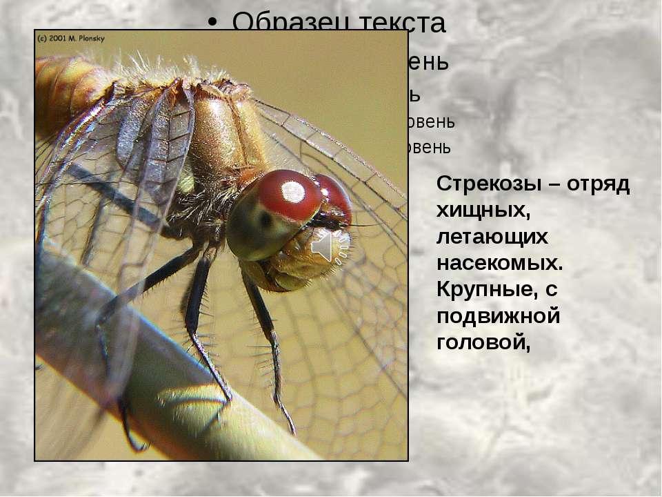 Стрекозы – отряд хищных, летающих насекомых. Крупные, с подвижной головой,