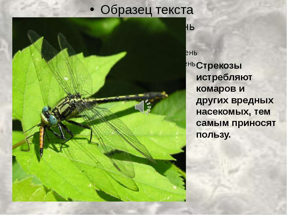 Стрекозы истребляют комаров и других вредных насекомых, тем самым приносят по...