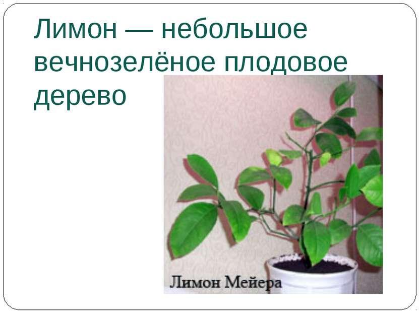 Лимон— небольшое вечнозелёное плодовое дерево