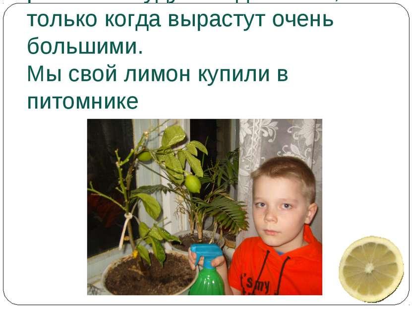 Выращенные из косточек растения будут плодоносить, только когда вырастут очен...