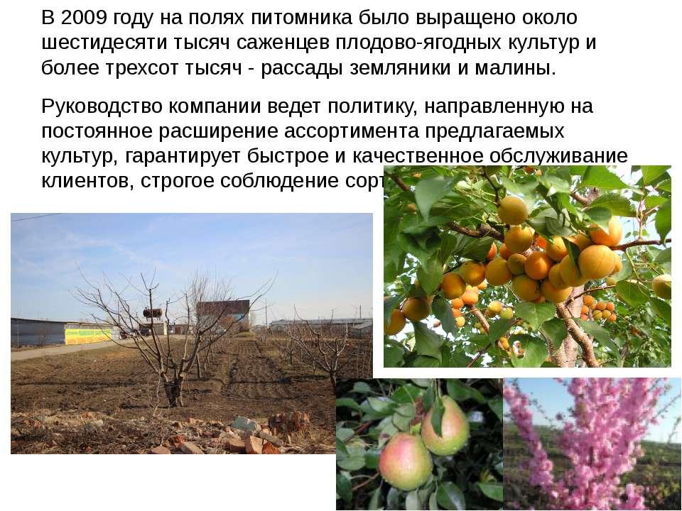 В 2009 году на полях питомника было выращено около шестидесяти тысяч саженцев...