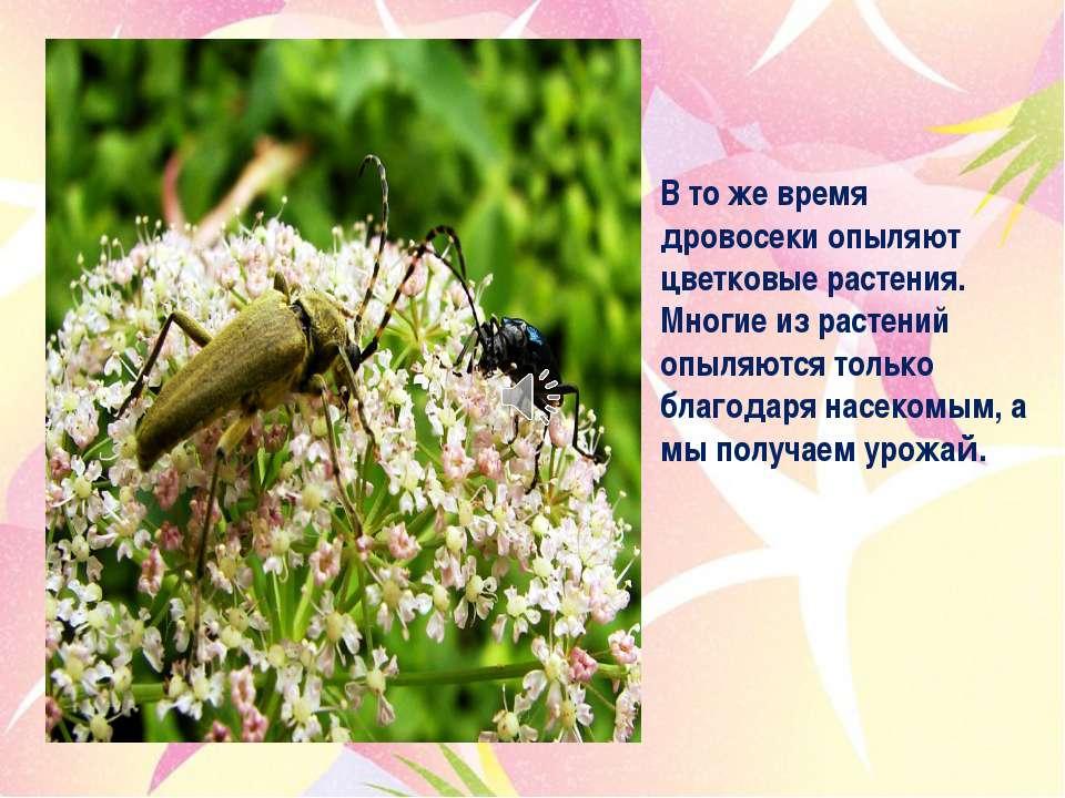 В то же время дровосеки опыляют цветковые растения. Многие из растений опыляю...
