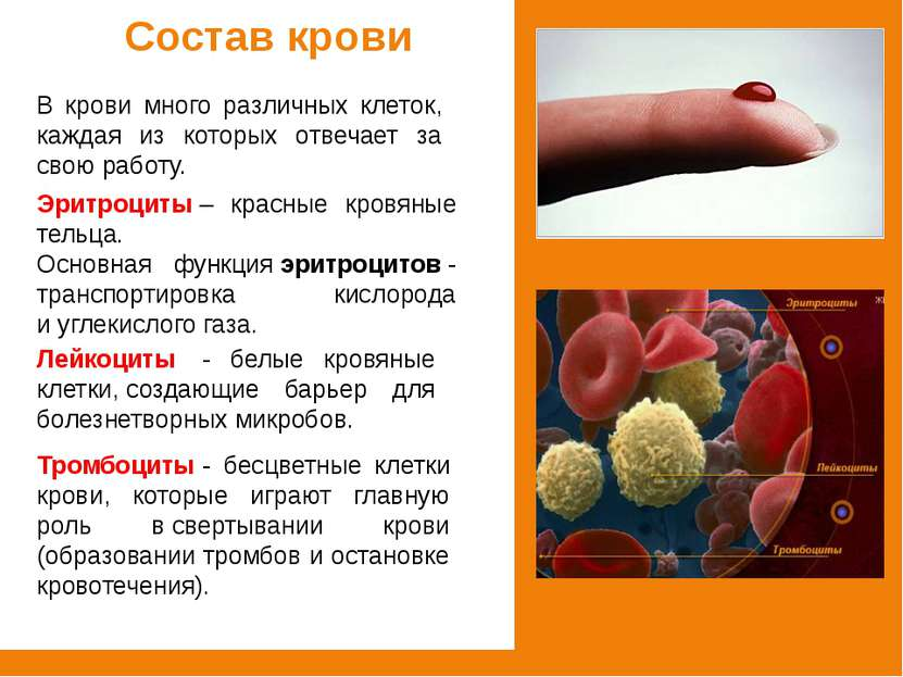 Состав крови В крови много различных клеток, каждая из которых отвечает за св...
