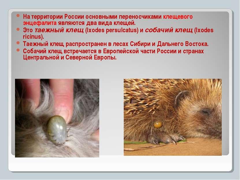 к На территории России основными переносчиками клещевого энцефалита являются ...
