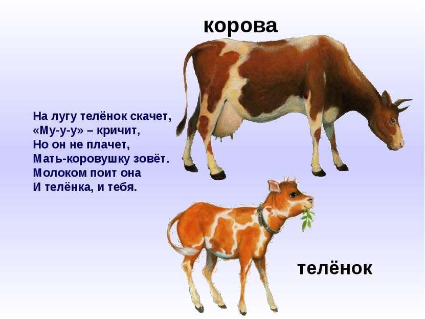 На лугу телёнок скачет, «Му-у-у» – кричит, Но он не плачет, Мать-коровушку зо...