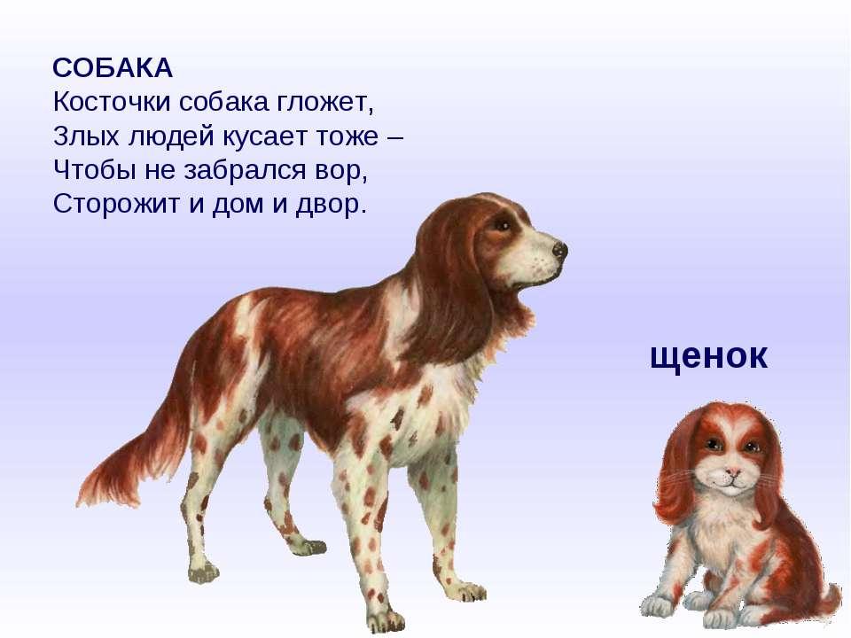 СОБАКА Косточки собака гложет, Злых людей кусает тоже – Чтобы не забрался вор...