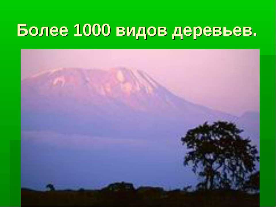 Более 1000 видов деревьев.