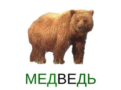 МЕДВЕДЬ
