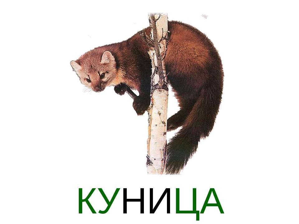 КУНИЦА