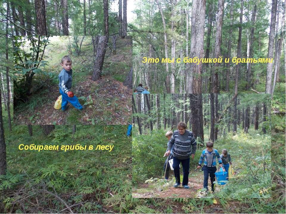 Это мы с бабушкой и братьями Собираем грибы в лесу