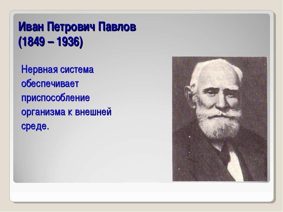 Иван Петрович Павлов (1849 – 1936) Нервная система обеспечивает приспособлени...