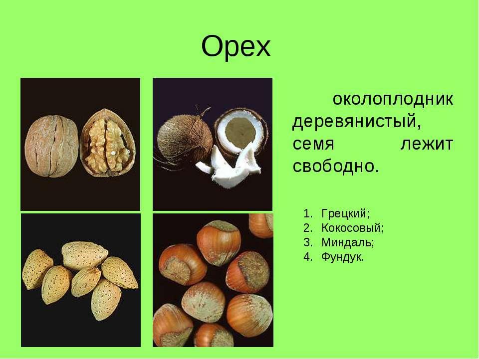 Орех околоплодник деревянистый, семя лежит свободно. Грецкий; Кокосовый; Минд...