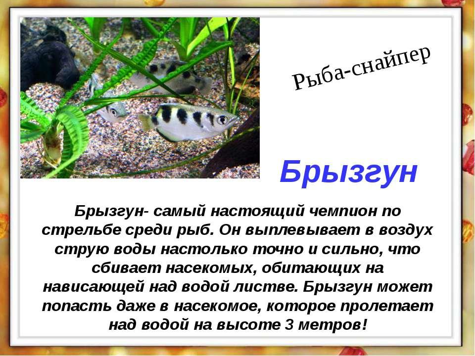 Брызгун- самый настоящий чемпион по стрельбе среди рыб. Он выплевывает в возд...