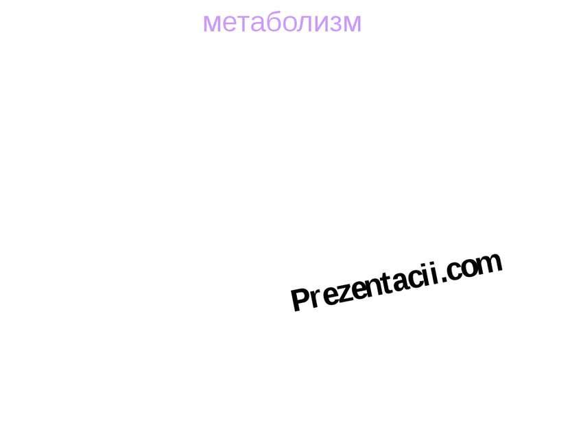 метаболизм Prezentacii.com