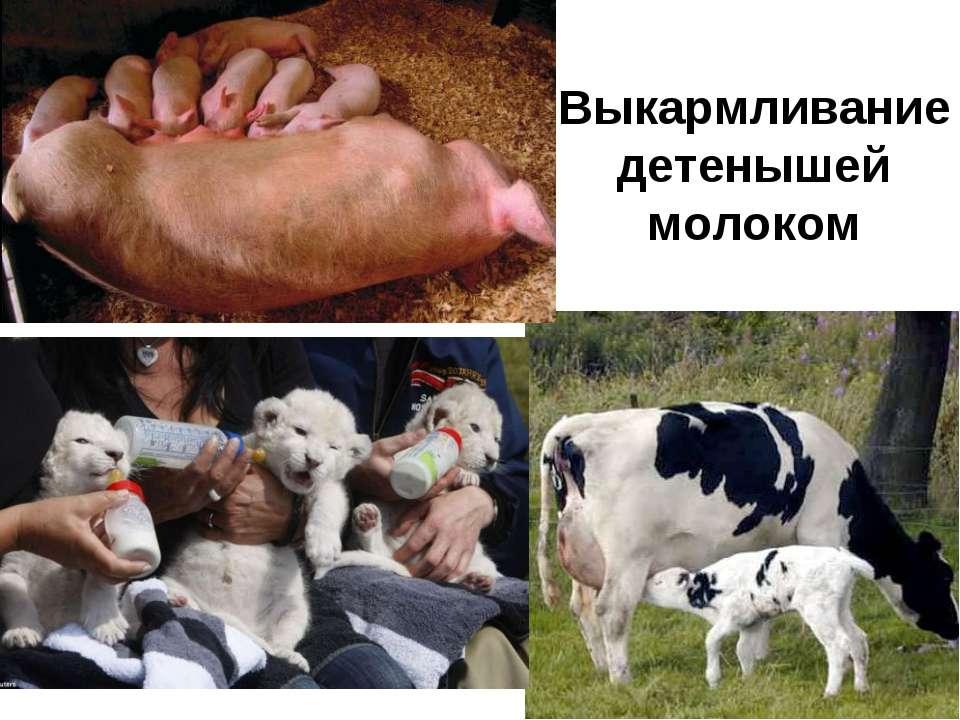 Выкармливание детенышей молоком