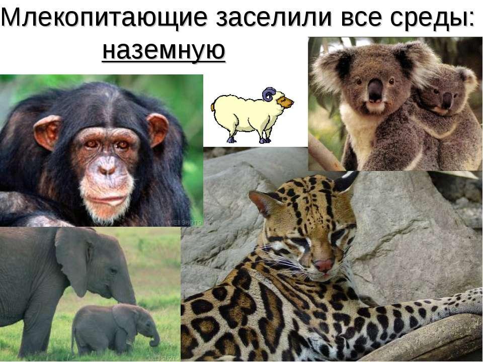 Млекопитающие заселили все среды: наземную