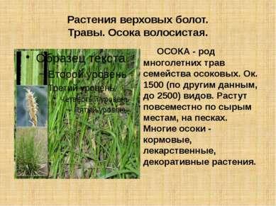Растения верховых болот. Травы. Осока волосистая. ОСОКА - род многолетних тра...