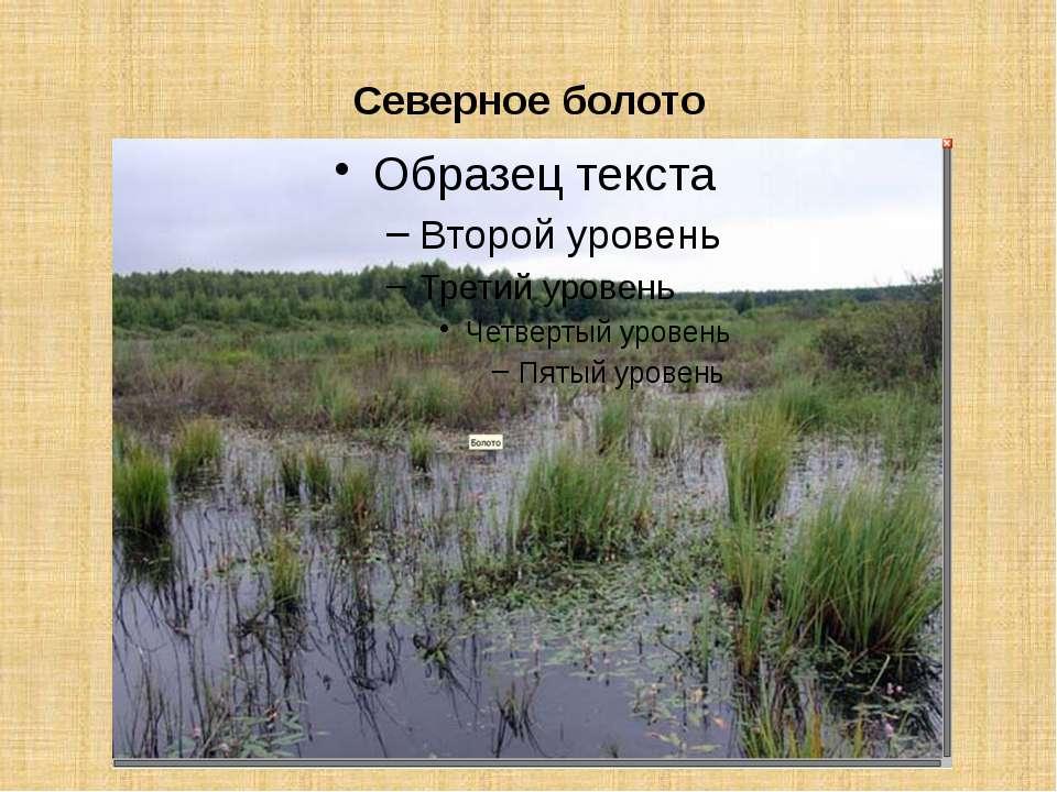 Северное болото