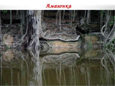 Амазонка На всем своем протяжении Амазонка принимает около 500 притоков. В ме...