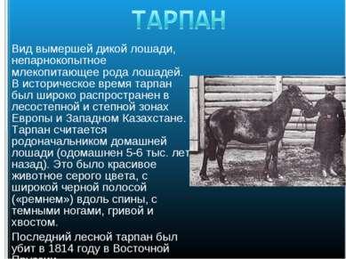 Вид вымершей дикой лошади, непарнокопытное млекопитающее рода лошадей. В исто...