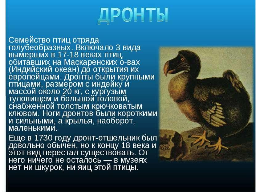 Семейство птиц отряда голубеобразных. Включало 3 вида вымерших в 17-18 веках ...