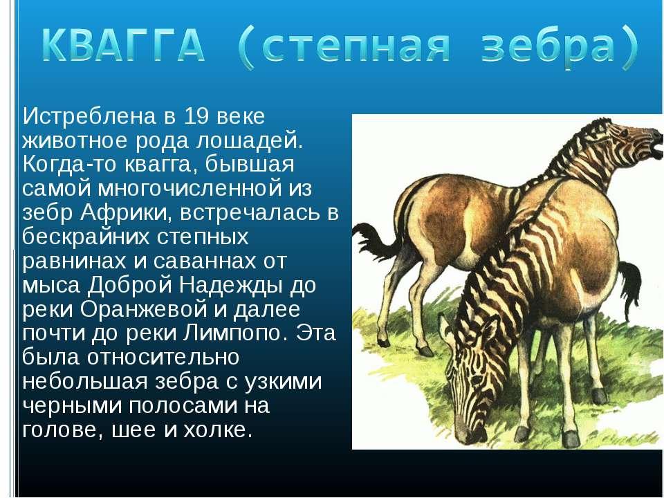Истреблена в 19 веке животное рода лошадей. Когда-то квагга, бывшая самой мно...