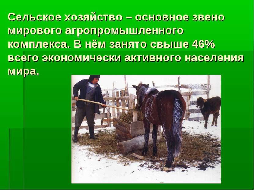 Сельское хозяйство – основное звено мирового агропромышленного комплекса. В н...
