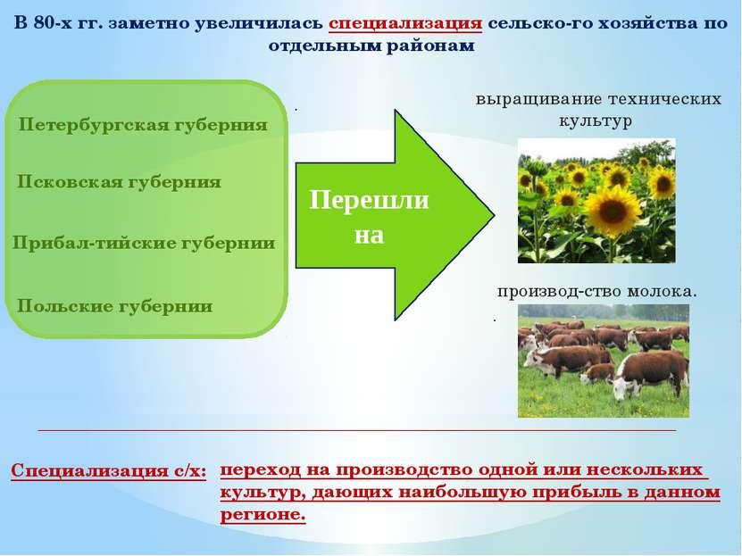 В 80-х гг. заметно увеличилась специализация сельско го хозяйства по отдельны...