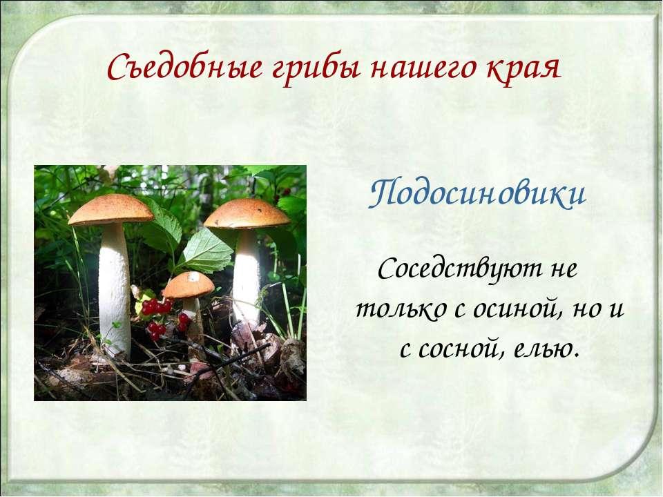 Съедобные грибы нашего края Подосиновики Соседствуют не только с осиной, но и...