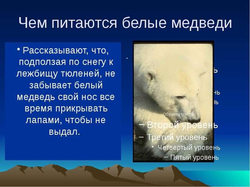 Чем питаются белые медведи В море ловит белый медведь рыбу, на льдинах (да и ...