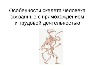 Особенности скелета человека связанные с прямохождением и трудовой деятельностью