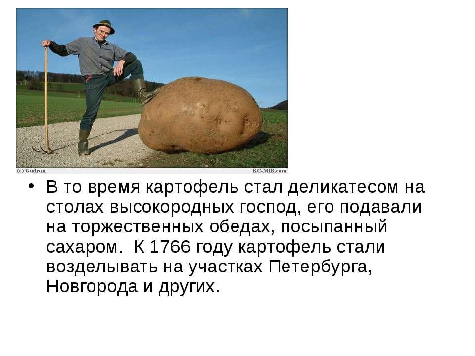 В то время картофель стал деликатесом на столах высокородных господ, его пода...