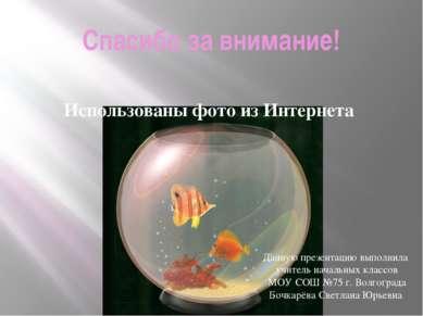 Спасибо за внимание! Использованы фото из Интернета Данную презентацию выполн...