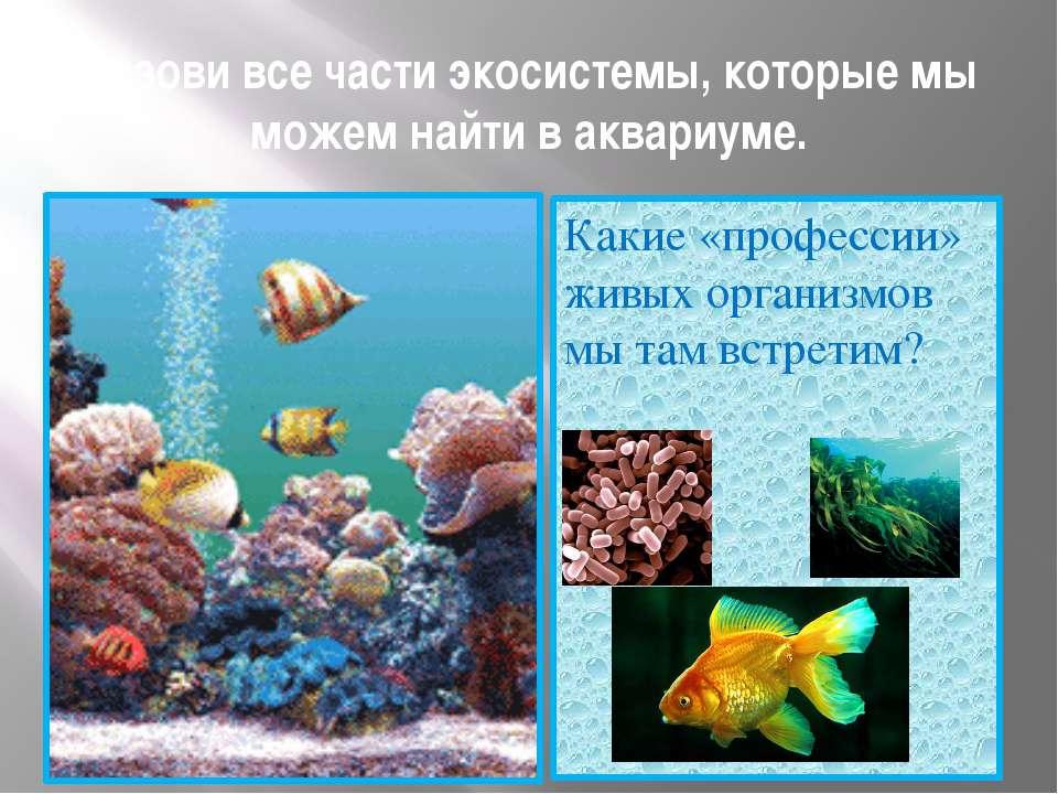 Назови все части экосистемы, которые мы можем найти в аквариуме. Какие «профе...