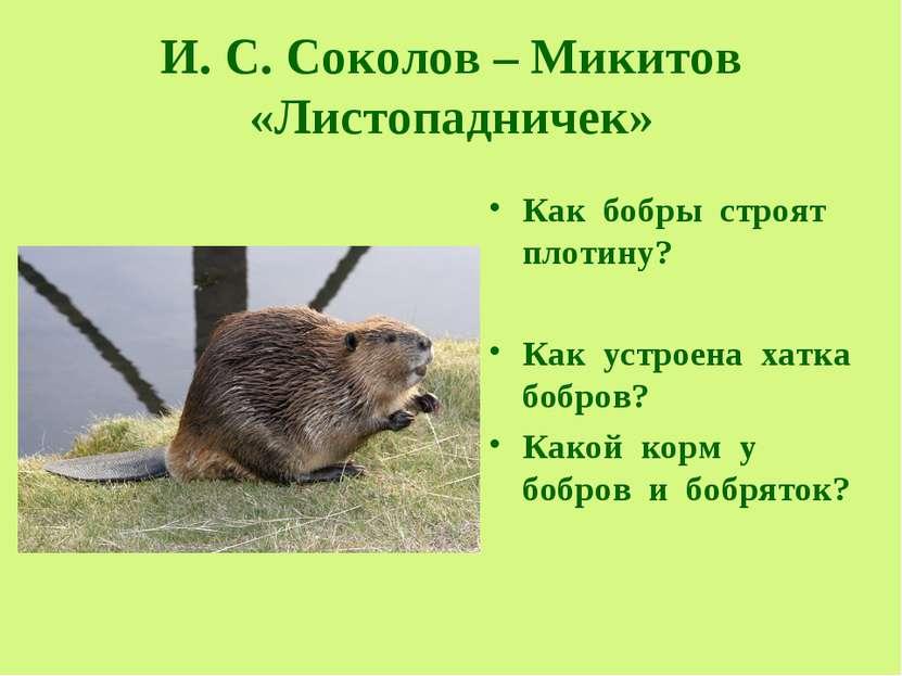 И. С. Соколов – Микитов «Листопадничек» Как бобры строят плотину? Как устроен...