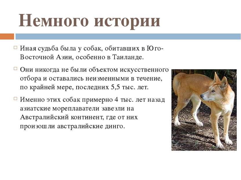 Немного истории Иная судьба была у собак, обитавших в Юго-Восточной Азии, осо...