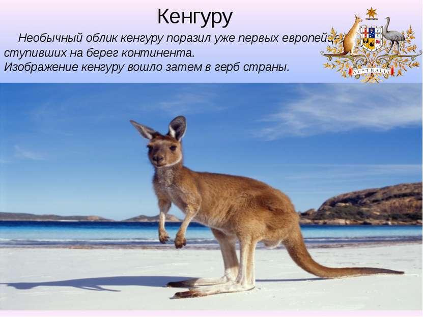 Необычный облик кенгуру поразил уже первых европейцев, ступивших на берег кон...