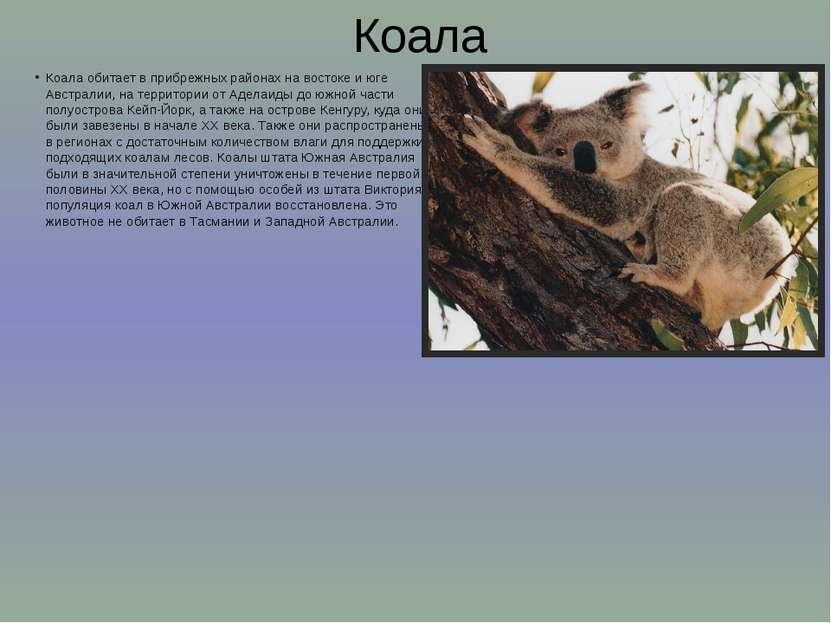 Коала Коала обитает в прибрежных районах на востоке и юге Австралии, на терри...