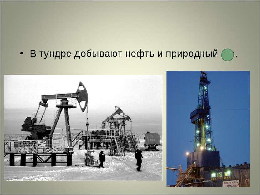 В тундре добывают нефть и природный газ.
