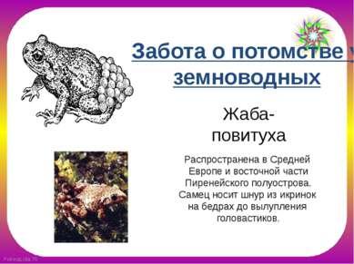 Жаба-повитуха Распространена в Средней Европе и восточной части Пиренейского ...