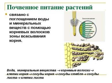Почвенное питание растений связано с поглощением воды и минеральных веществ с...
