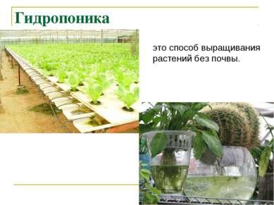 Гидропоника это способ выращивания растений без почвы.