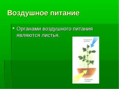 Воздушное питание Органами воздушного питания являются листья.