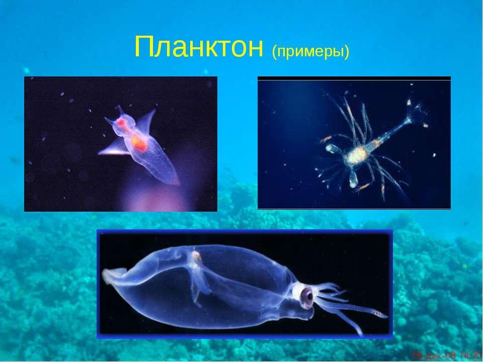 Планктон (примеры)