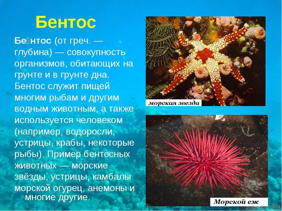 Бентос Бе нтос(отгреч.— глубина)— совокупность организмов, обитающих на г...
