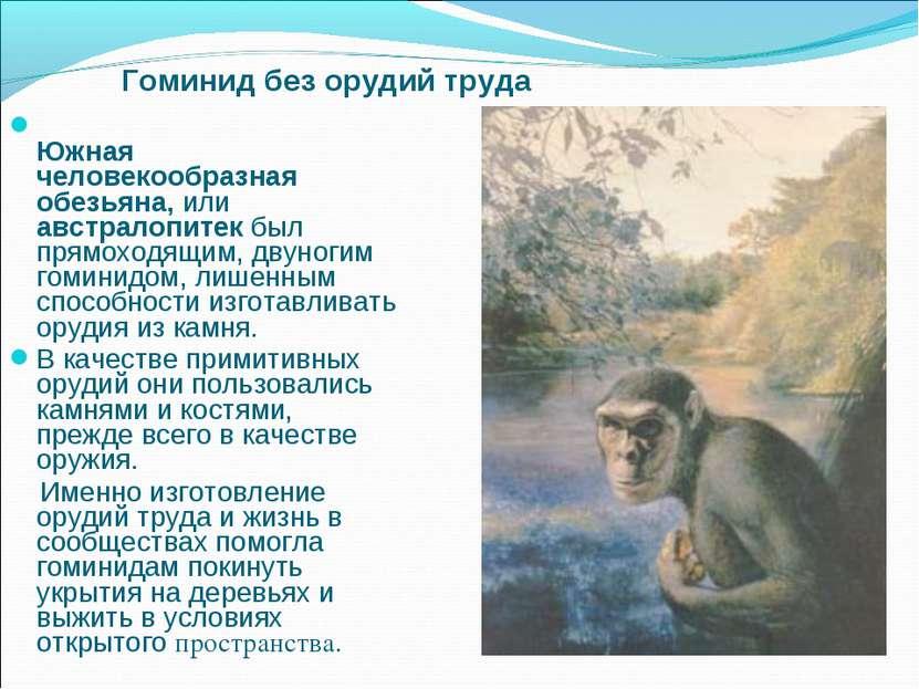 Южная человекообразная обезьяна, или австралопитек был прямоходящим, двуногим...